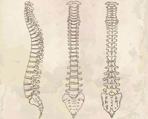 Human Spine Diagram
